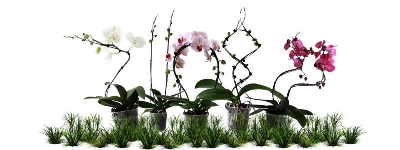 Groeivormen voor orchideeën